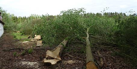 Massiv fældning af træer ved Rørstensgården